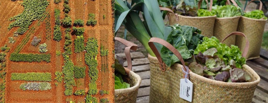 L'avenir du food : le SIAL et les tendances alimentaires décriptées avec Tomate&Co et le jardin sur-mesure