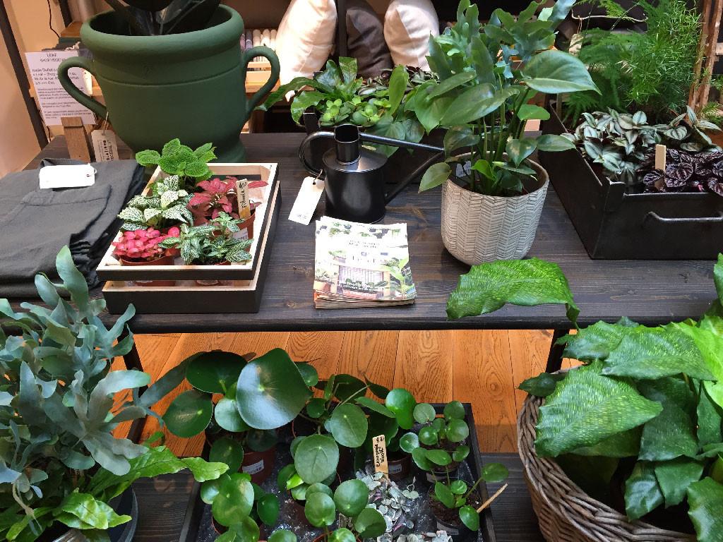 pop-up store à Paris : Leaf à la Trésorerie
